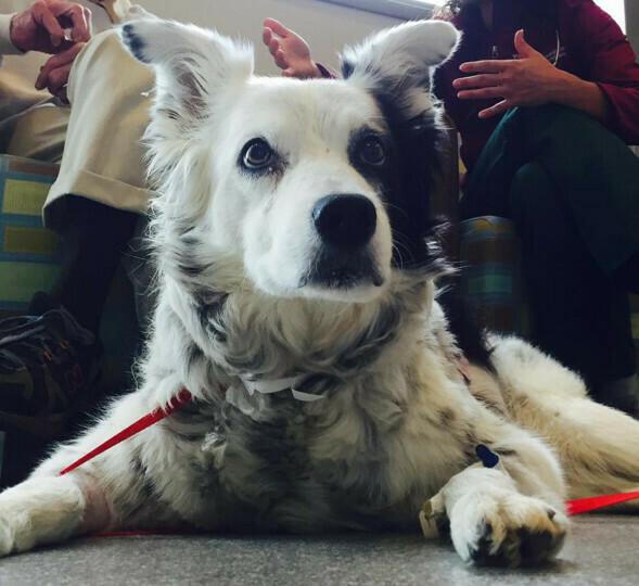 世界上最聪明的15岁狗狗去世,会认单词还会推理